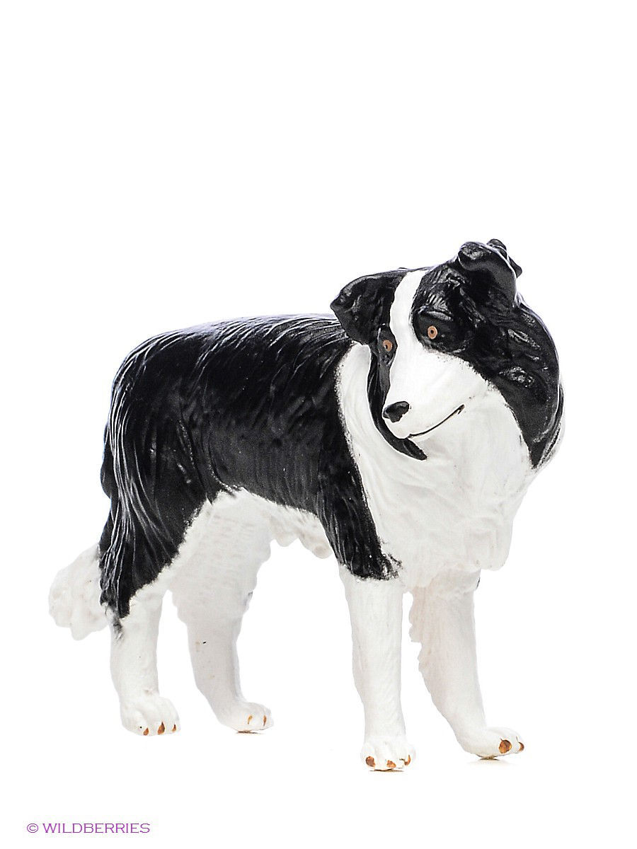 Border Collie/Бордер-колли MOJO 387203
